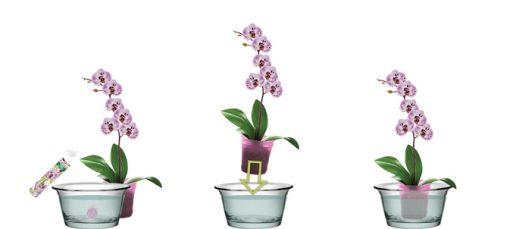 Orchid blooming fertilizer