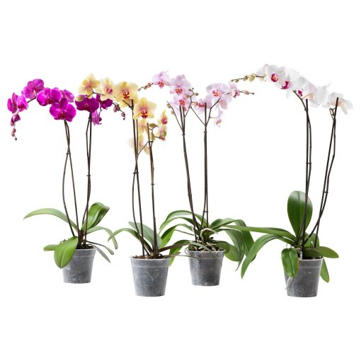 orchid plants fertilizer